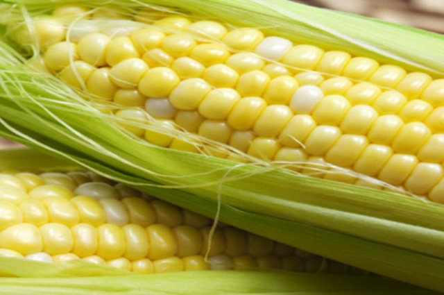 How bad are GMO soy and corn?