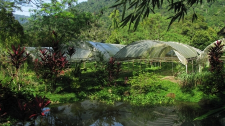 Green Wish Vegi Garden