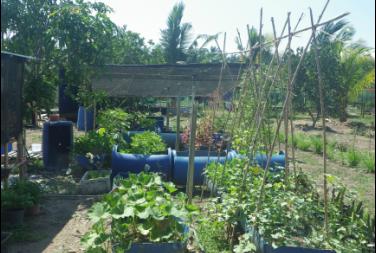 Kebun Kaki Bukit