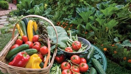 Starting your own organic garden