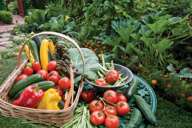 Starting your own organic garden