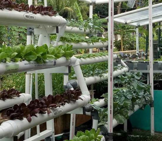 Urban farming – What is it and if it is possible?