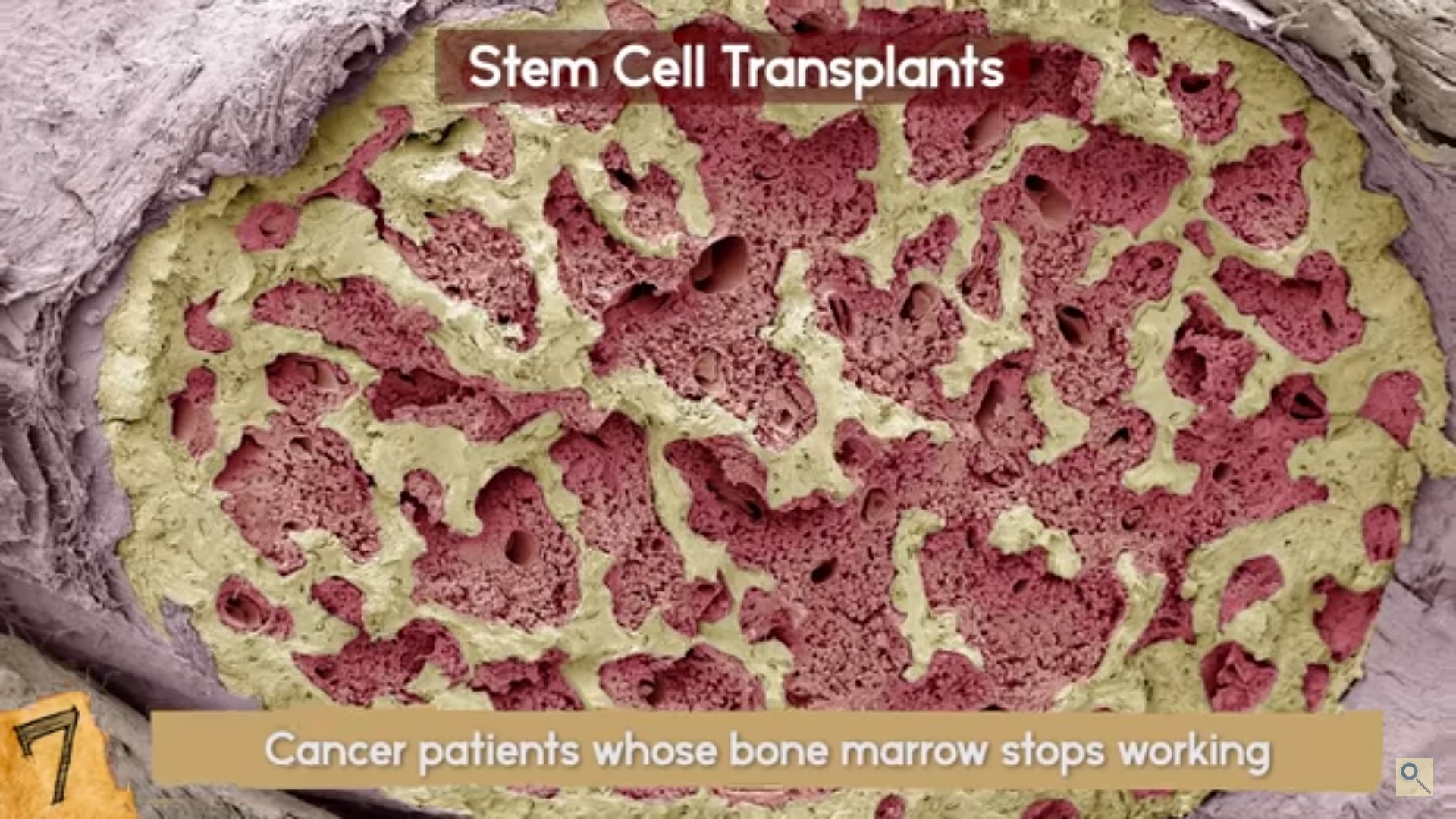 Stem Cells developments