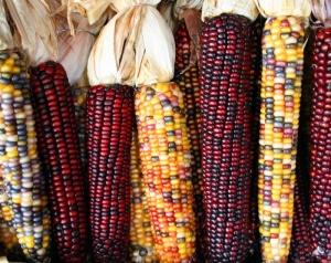 Multicolored-Corn-Natural